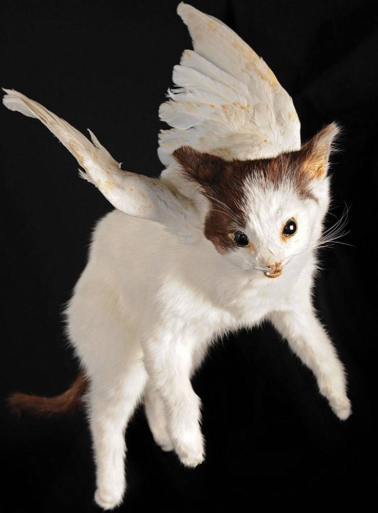 Angel Kitten